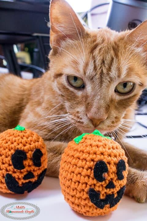 Orange cat with Crochet Pumpkin Stress Ball