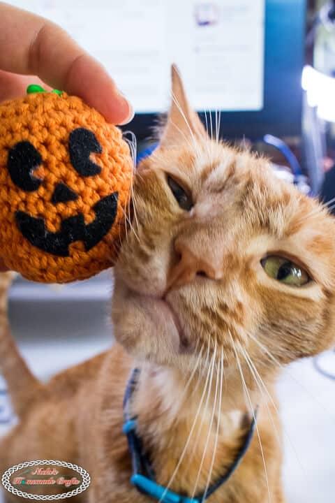 Crochet Pumpkin Stress Ball with orange cat